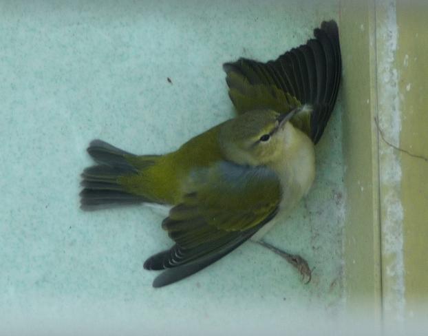 Injured & Orphaned Animals – Amos Butler Audubon Society