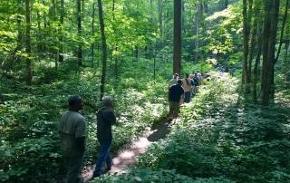 Bird Hikers in the Woods